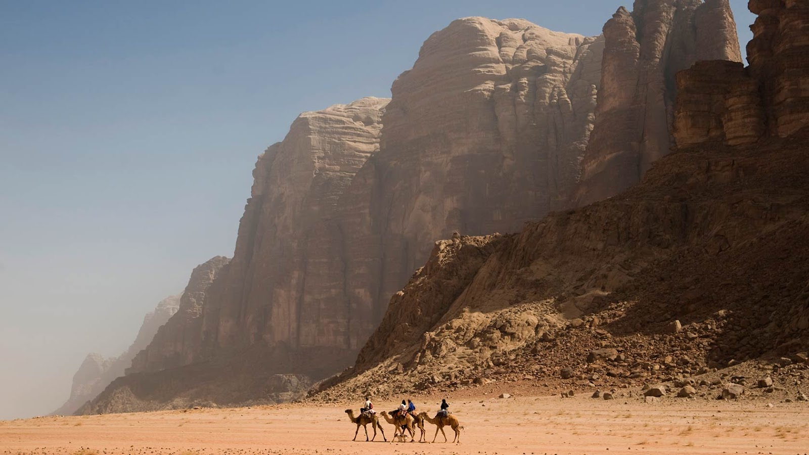 Dromedary in Wadi Rum, Jordan