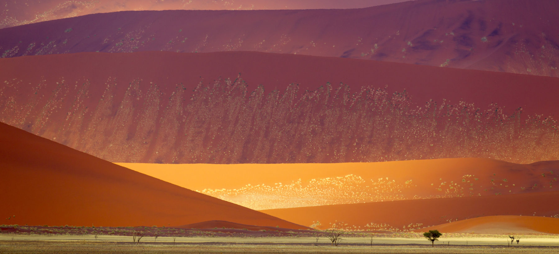 Namib-Naukluft National Park sand dunes